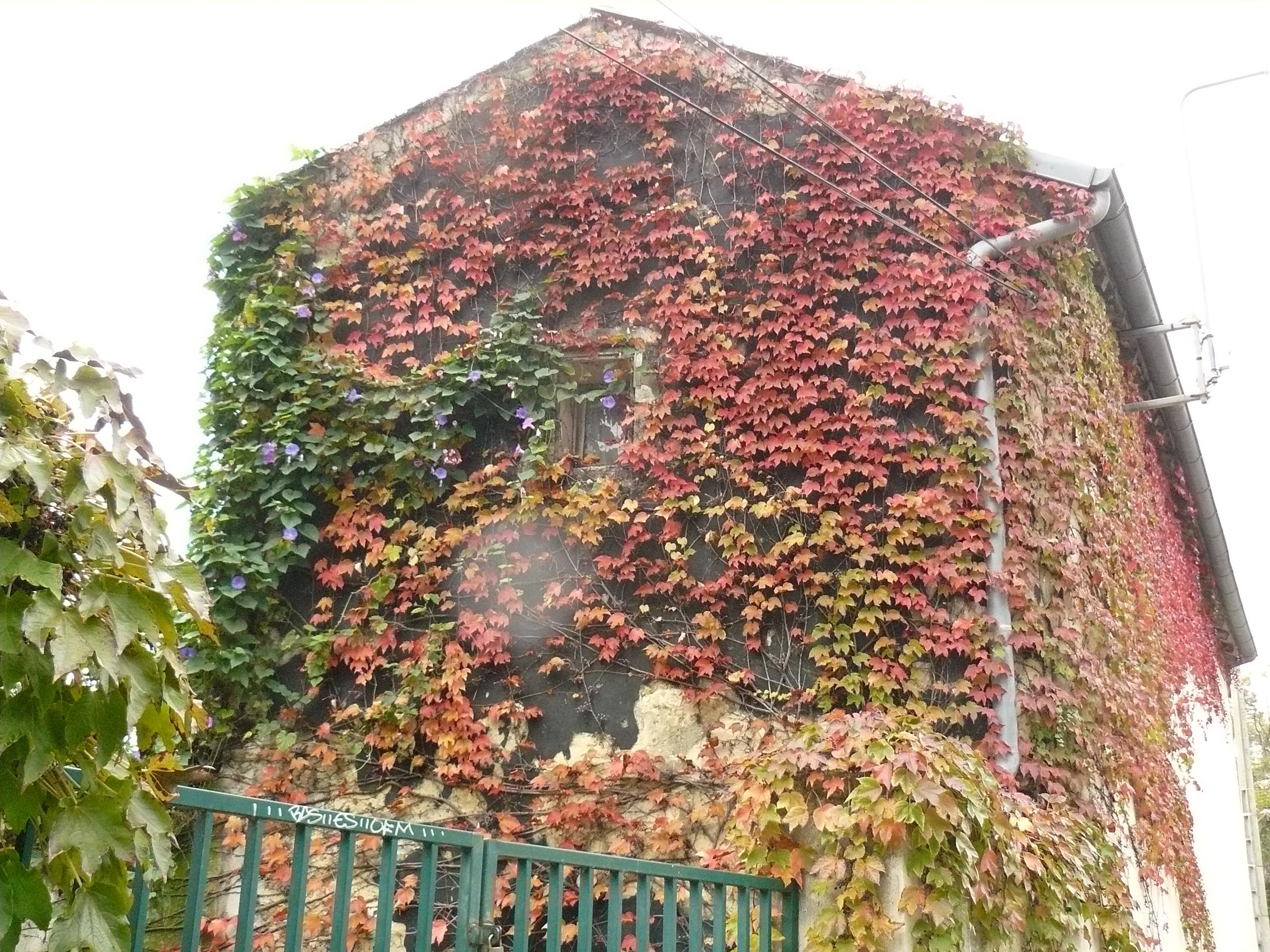 Mur mur 1, rue ABERT MPT